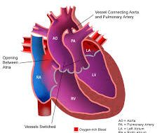 Divisi Kardiologi Pediatrik dan Penyakit Jantung Bawaan